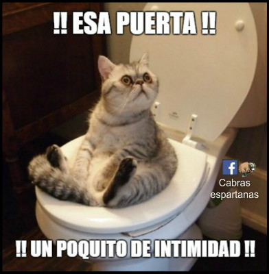 gato-water-intimidad