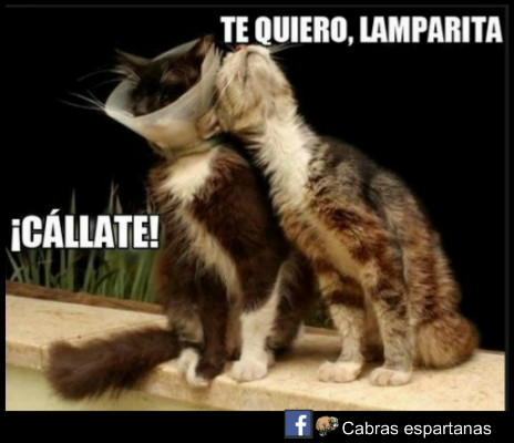 Amor De Gatos Cabras Espartanas