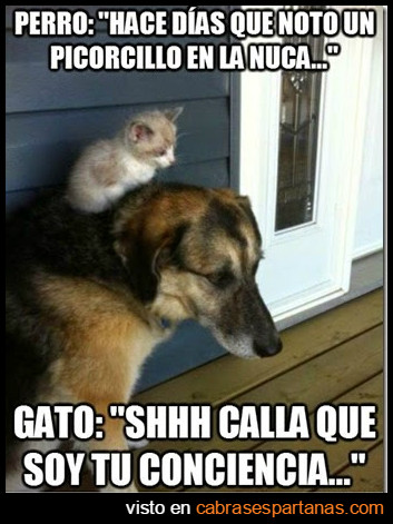 conciencia-perro-gato