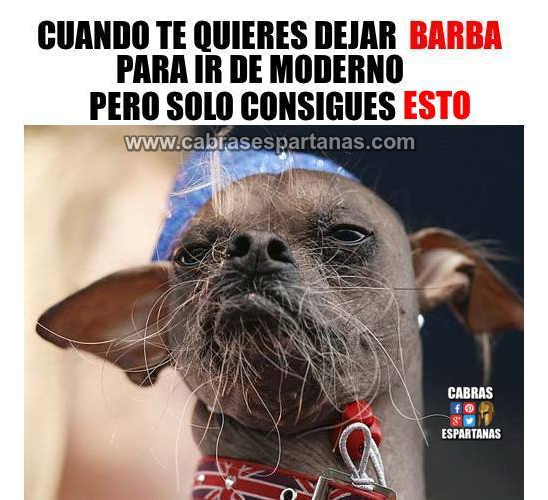 Barba par estar al día